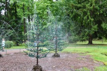Trick fountains in trees