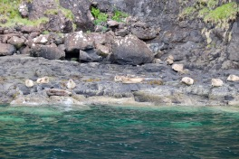 Another colony of common seals