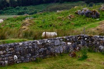 Wall bordering Cill Chriosd