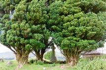Grave amongst trees