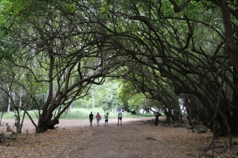 Walking through the canopy of trees