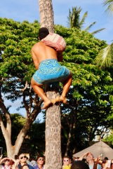 Climbing the coconut tree