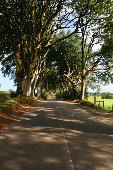 Dark Hedges (or The King's Road for Game of Thrones)