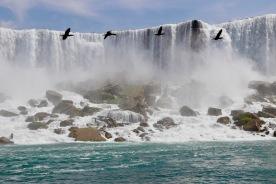 American Falls - Niagara Falls with geese