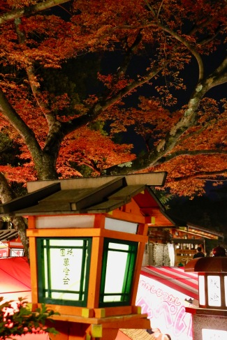 Japanese maple tree in the Yasaka-Jinja Shrine