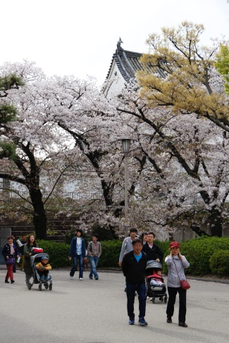 Cherry blossoms at Osaka Castle, Osaka