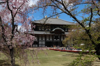 Cherry Blossoms and Todaiji Temple, Nara, Japan