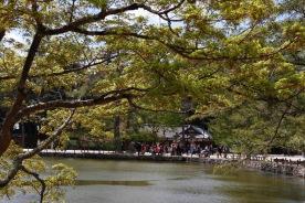 Gardens of Nara Park, Japan