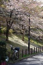 Street near Oyama Jinja Shrine, Kanazawa, Japan