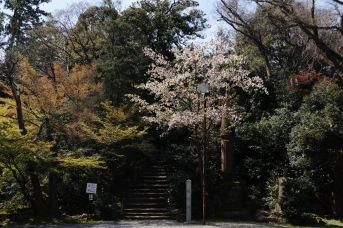 Gardens at Oyama Jinja Shrine - Kanazawa, Japan