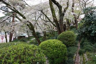 Park of cherry blossoms, Kanazawa Castle Park, Kanazawa, Japan