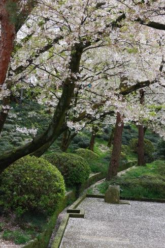 Cherry blossoms, Kanazawa Castle Park, Kanazawa, Japan