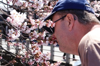 Phil checking out for his sister-in-law if the cherry blossoms had any scent, Takayama, Japan