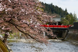 Cherry Blossoms and the Miyagawa River, Takayama, Japan