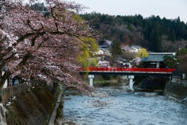 Cherry blossoms, Nakabashi Bridge, Takayama, Japan